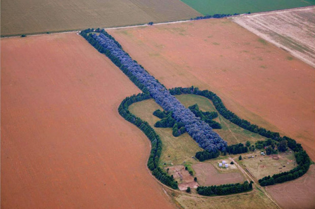 Argentina: seven thousand trees for the guitar of Graciela Pedro
