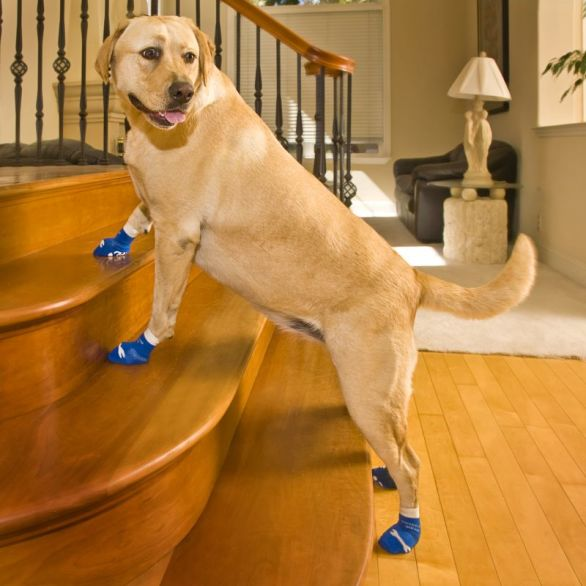 A pair of non slip slippers to pamper your dog's paws