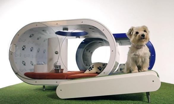 Dream Doghouse