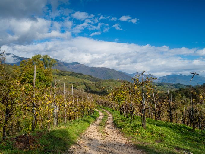 Do the Prosecco Trail in Italy