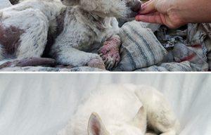 To adopt doggies is also glamorous