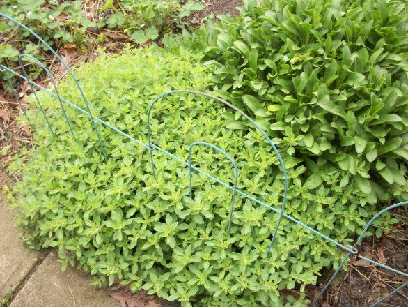 garden-05-15-11-013