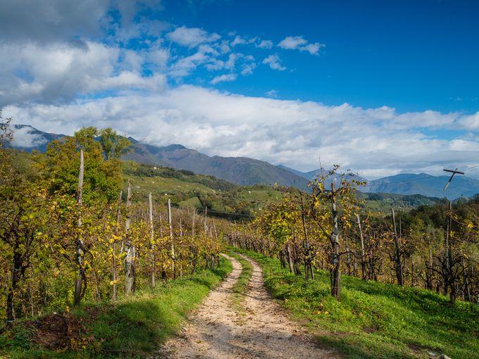 Do the Prosecco Trail in Italy
