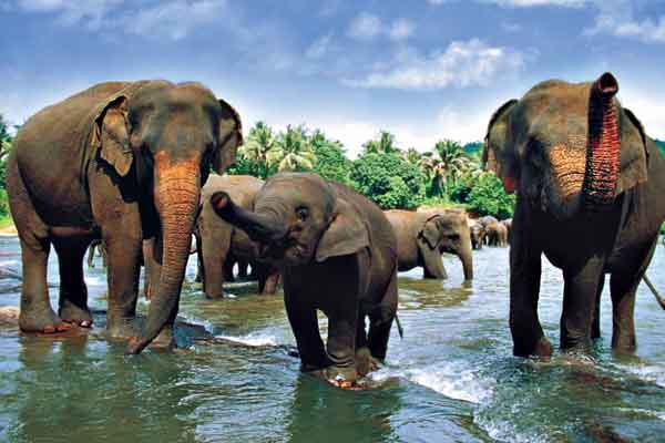 Get Close with Elephants in Sri Lanka